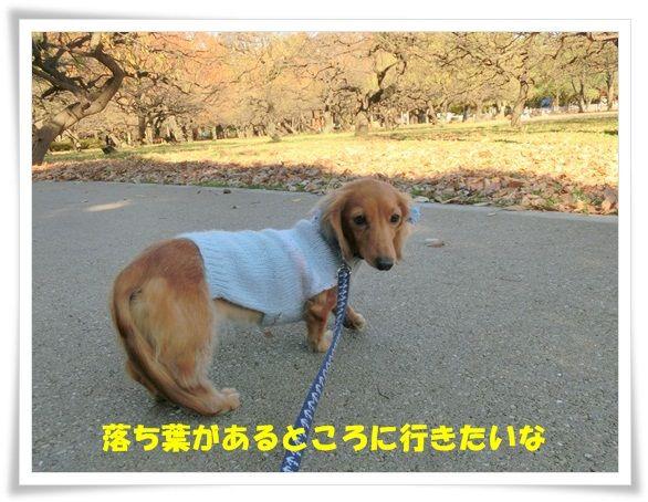 CIMG7731-20121206.jpg