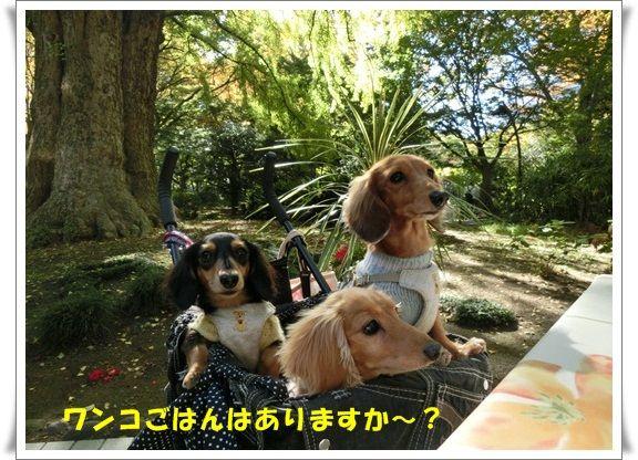 CIMG5708-20121111.jpg