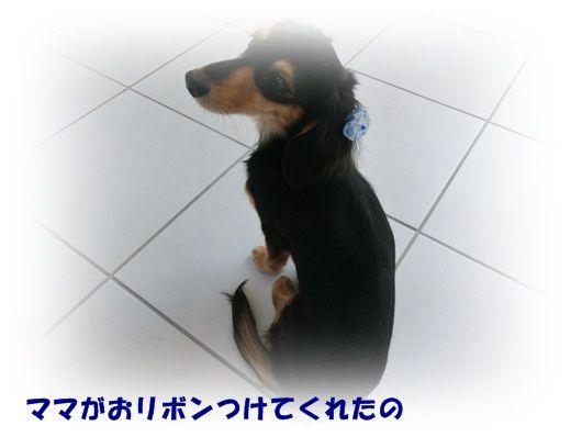 CIMG4678-20121016.jpg