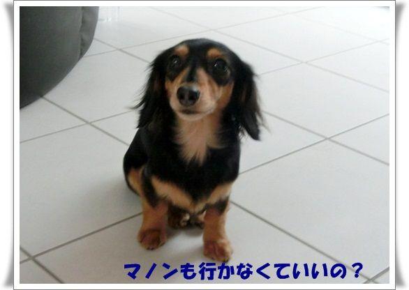 CIMG8294-20121223.jpg