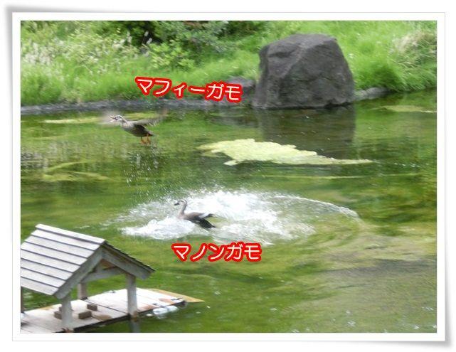 13_20140519095240c95.jpg