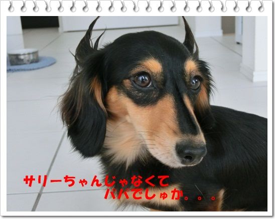 CIMG2932.jpg