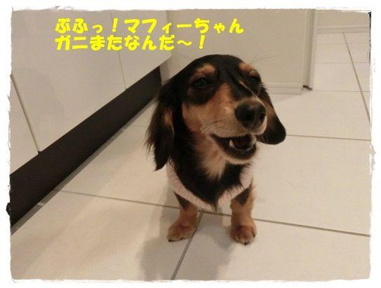 CIMG5699-20121114.jpg