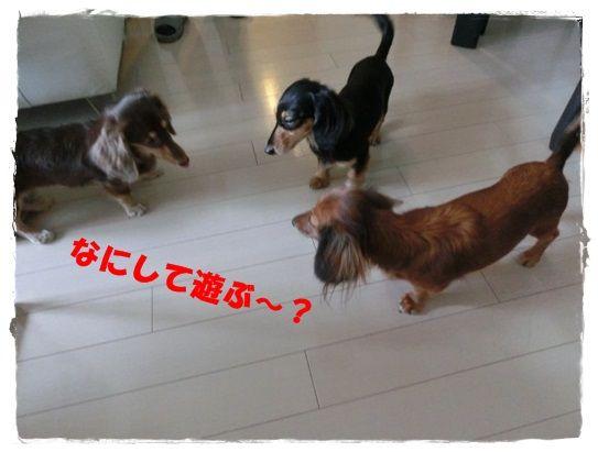 CIMG7188-20121202.jpg