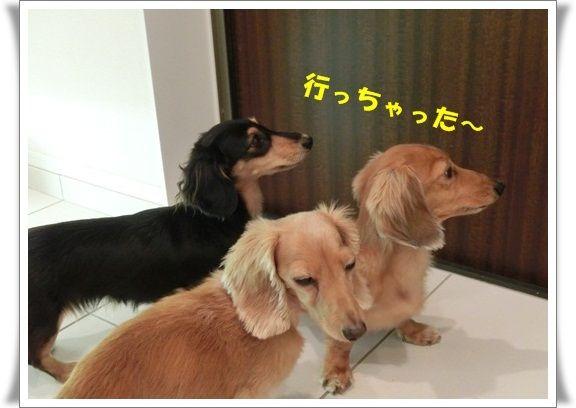 CIMG2881_20120912124300.jpg