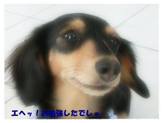 CIMG7899-20121208.jpg