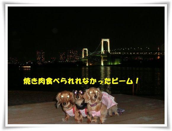 CIMG2446-20130318.jpg