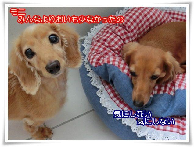 15_2014082809511484c.jpg