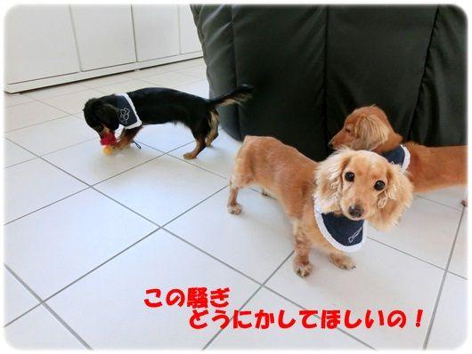 CIMG5930-20121113.jpg