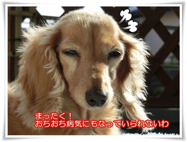 11_20141019091541fac.jpg