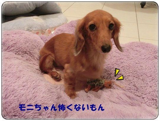 CIMG5227-20121021.jpg