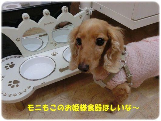CIMG5797-20121112.jpg