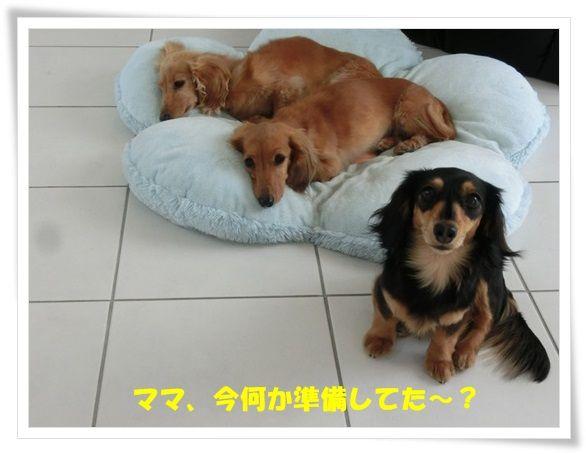 CIMG1-20130516.jpg
