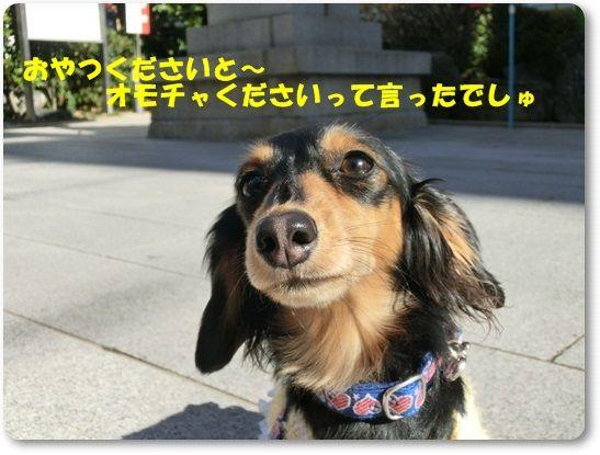 CIMG8677-20130104.jpg