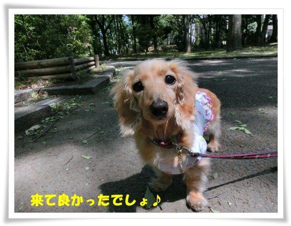 CIMG5-20130509.jpg