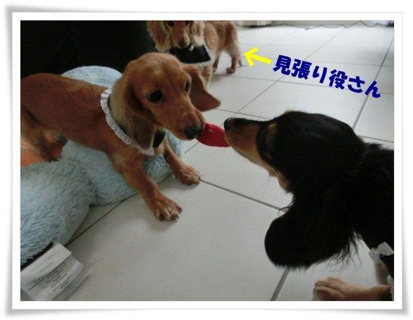 CIMG6973-20121130.jpg