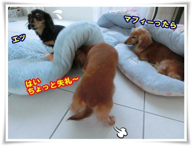 12_20131119111118ee2.jpg