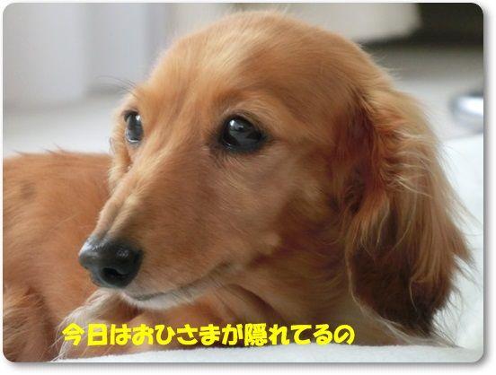 1_20130529131101.jpg