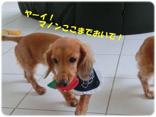 CIMG5854-20121113.jpg