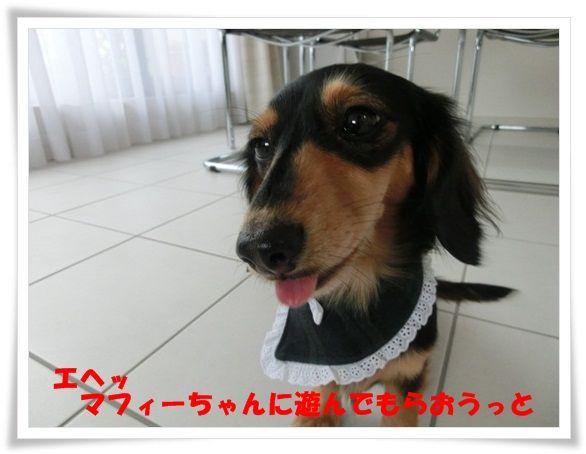 CIMG6923-20121130.jpg