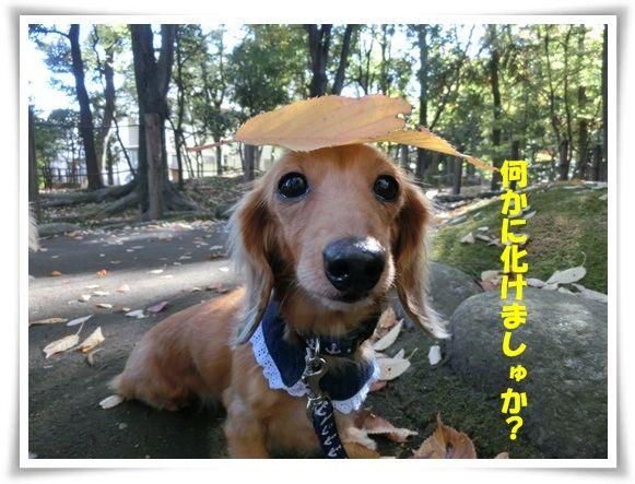 CIMG6069-20121116.jpg