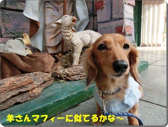 CIMG8178-20121219.jpg