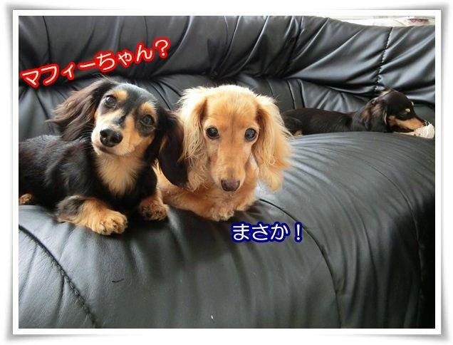 10_201407170900156ed.jpg