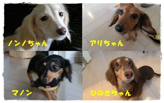 CIMG7141-20121202.jpg
