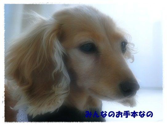 CIMG7887-20121208.jpg