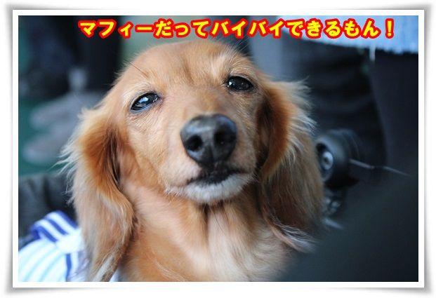 10_20131018102647bc9.jpg