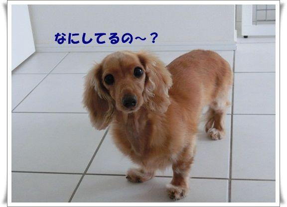 CIMG4471-20121013.jpg