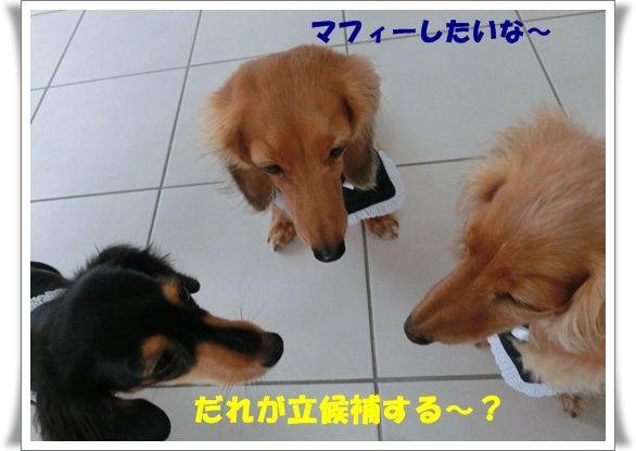 CIMG7453-20121204.jpg