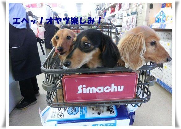 CIMG6166-20121118.jpg