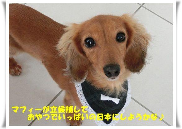 CIMG7479-20121204.jpg