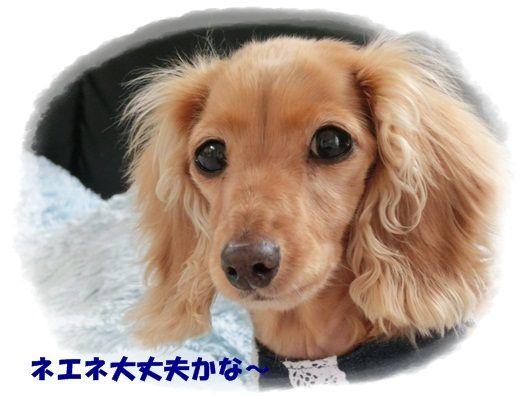 CIMG6887-20121128.jpg
