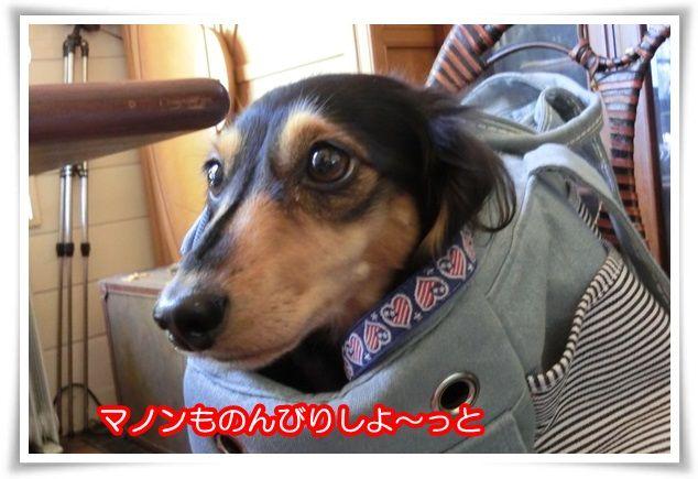 7_2015102720510368e.jpg