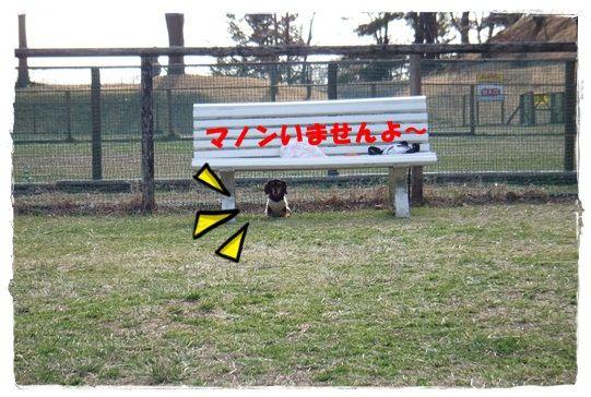 DSCF9263-20121221.jpg