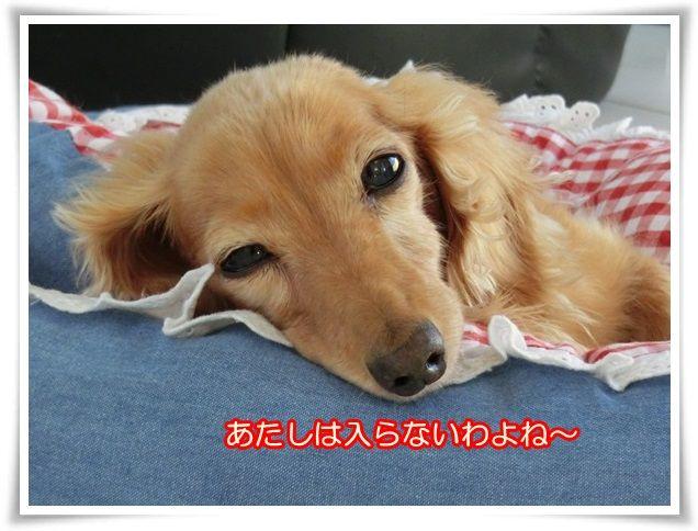 1_201410160926369ab.jpg