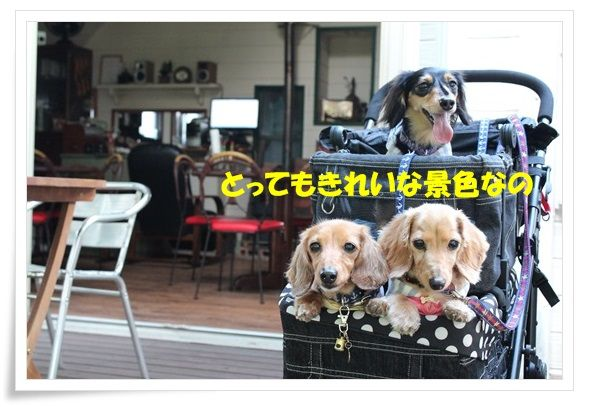 IMG_8880-20130710.jpg