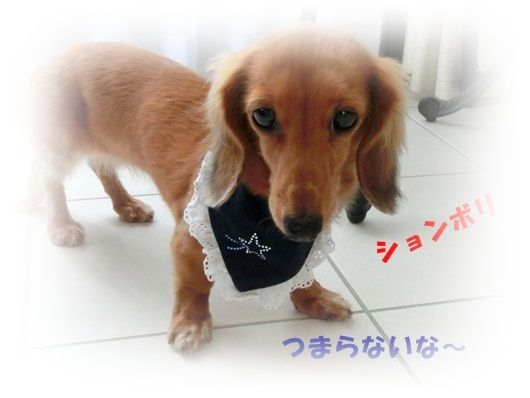 CIMG4791-20121018.jpg