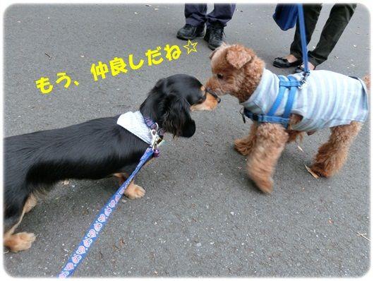 CIMG4586-20121015.jpg