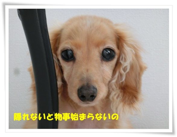 CIMG10-20130516.jpg