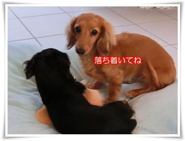 9_201412180856412c0.jpg