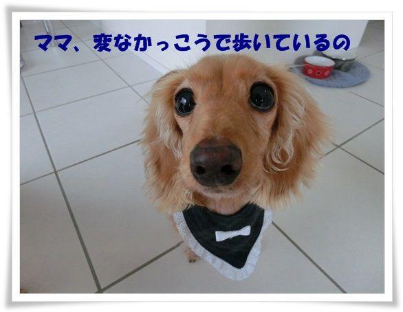 CIMG6908-20121130.jpg