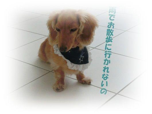 CIMG4787-20121018.jpg