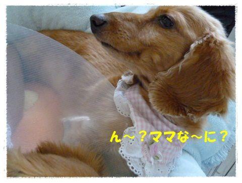 P1080742a.jpg