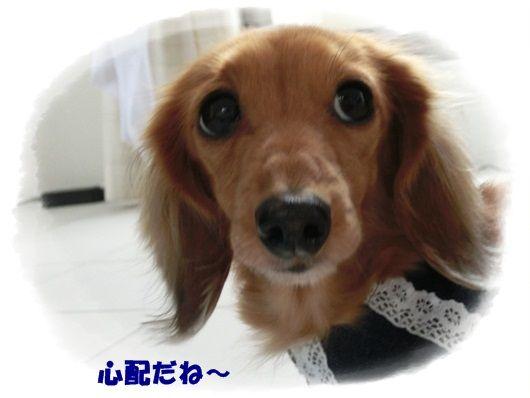 CIMG6893-20121128.jpg