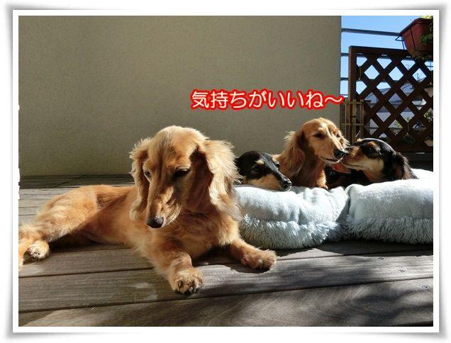 6_20141015044308547.jpg