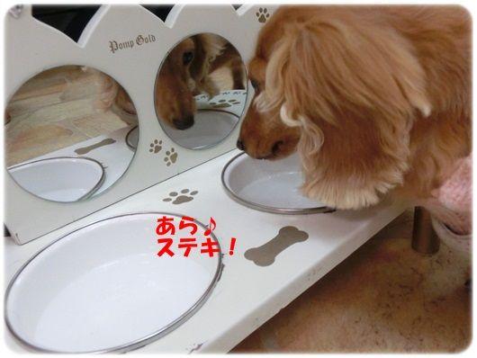 CIMG5798-20121112.jpg