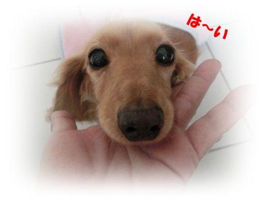 CIMG6113-20121117.jpg